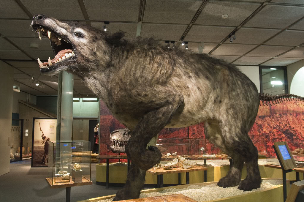 Arch Andrewsarchus